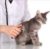 Ветеринарные клиники в Мирном